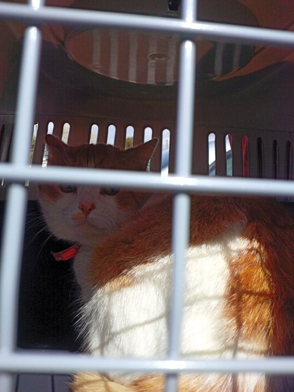 Ririkos, feline friend to Hector and Jason