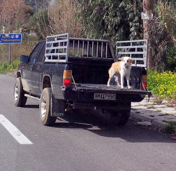 We passed this perfectly happy dog on the way to Igoumenitsa, but don't think we'll be adopting this style of transport any time soon!