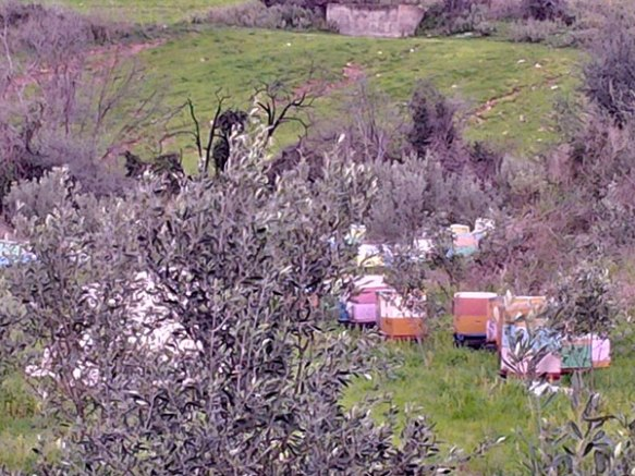 The hives were just across the other side of the road. We're intrigued by these wonderfully colourful hives which are dotted all over Greece. Perhaps if bees are driven by the colours of flowers, this is some kind of clever colour-coding?