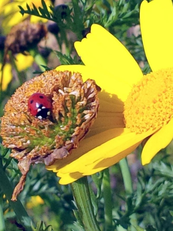 Ladybirds were also out, enjoying the spring sunshine