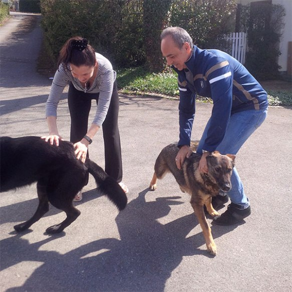 Bibi and Odin were so excited at being back with Alan and his wife that they quite forgot all their good manners for a few moments!