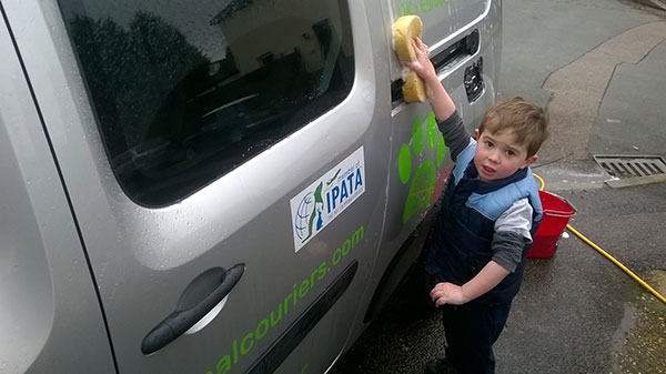 At Animalcouriers we like to start training them while they're young… here's courier D's youngest helping to clean one of our vans