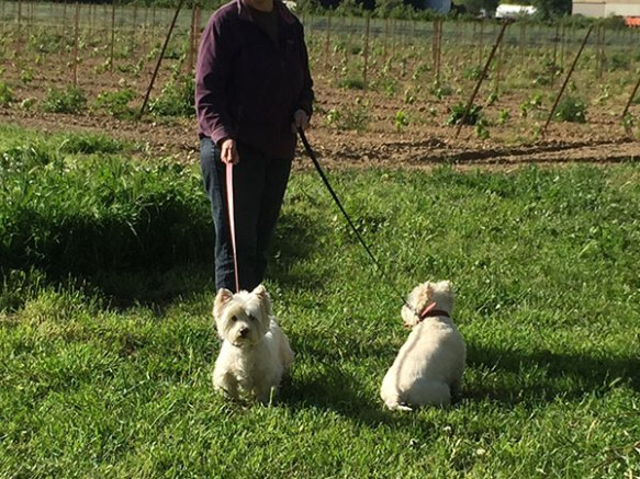 PJ and Belle enjoying a walk by the vineyard