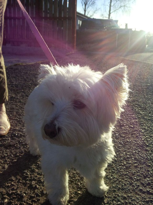 A closer look at Belle in a lovely ray of Scottish sunshine