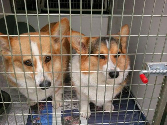 Teko (L) and tricolour Lola (R)