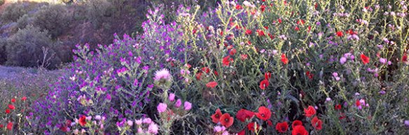 …and wild flowers in all directions…