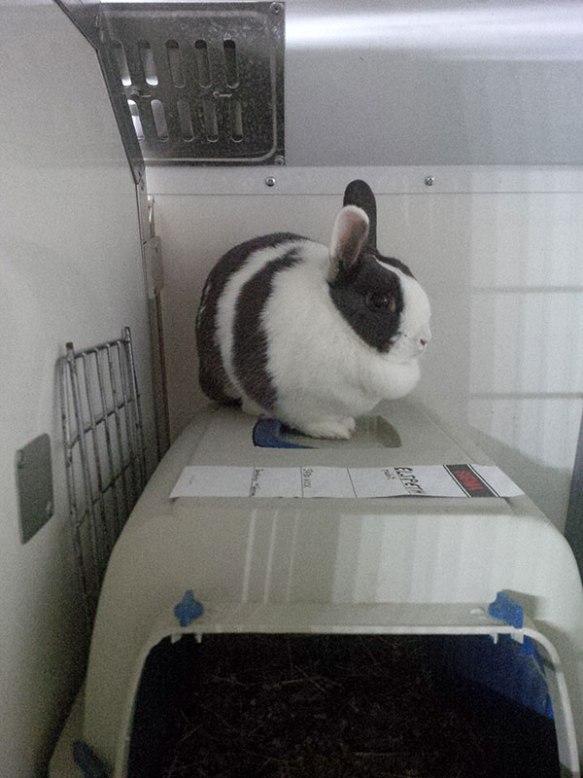 Cute rabbit Elspeth got on board in Barcelona