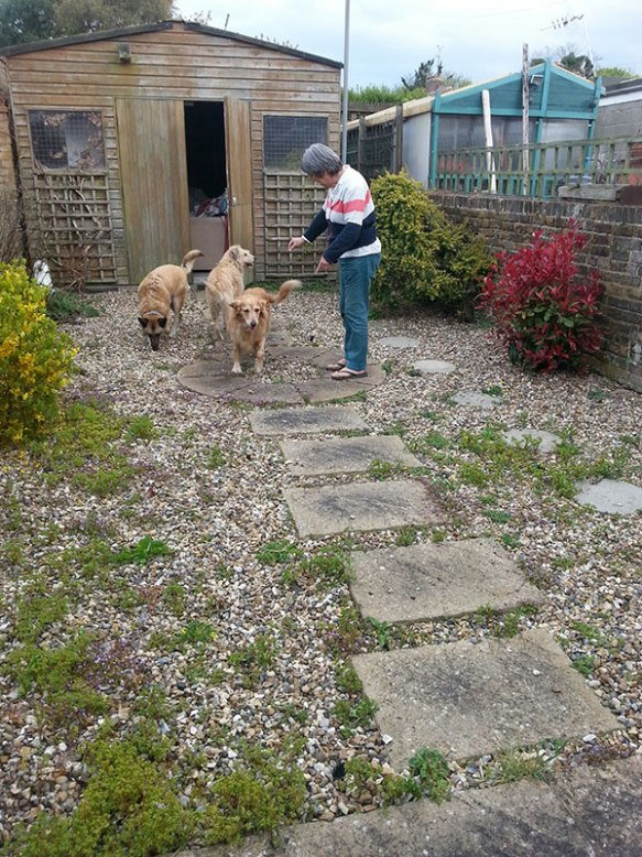 Anna at home in Margate with (L to R) Lluvia, Mikey and Dooby