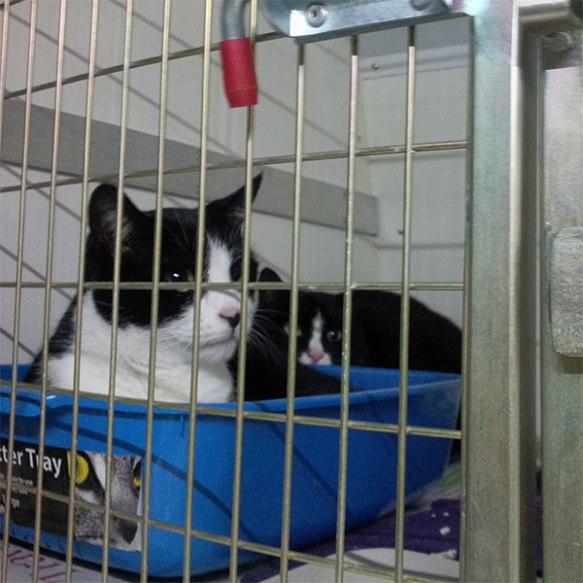 Daisy and Jasper — Jasper taking up residence in the litter tray!