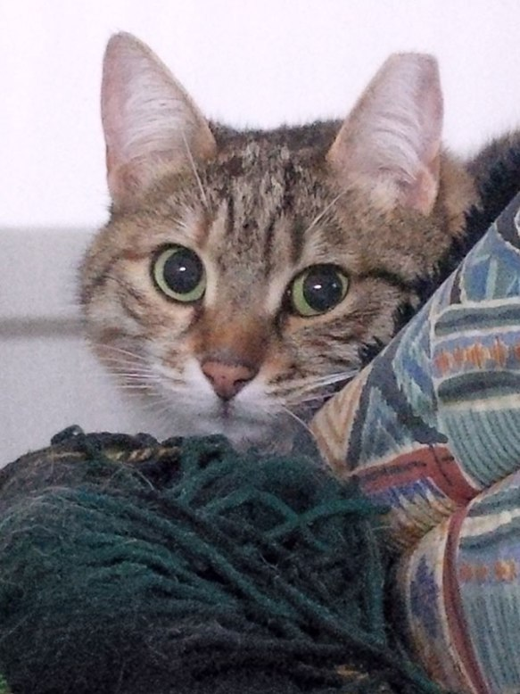 All sorted, and beautiful little tabby cat Cleo settles in
