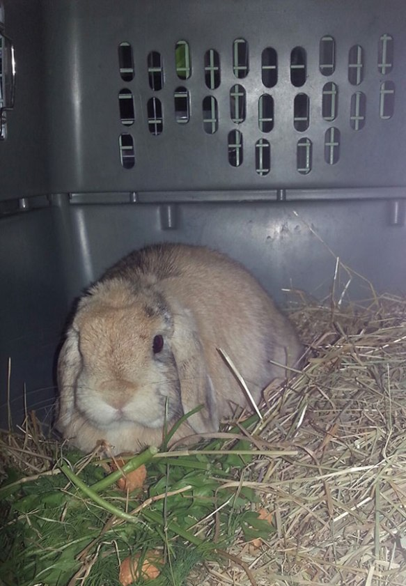 Pretty Margot enjoys tasty carrot and salad snacks