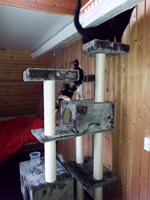 What a fabulous cat tree!