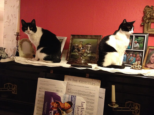 Bookend cats Whiskey and Bandit (aka Mongo)