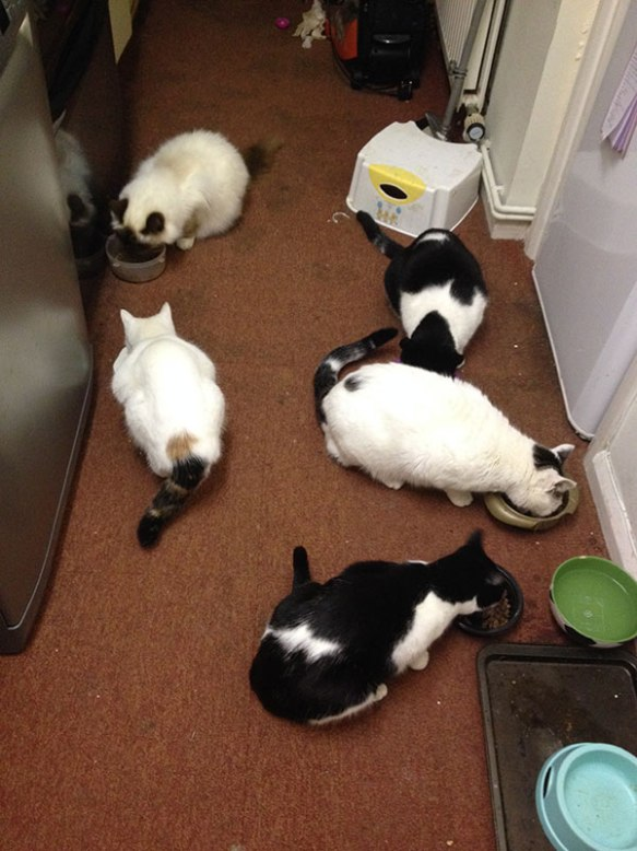 Five go mad for breakfast