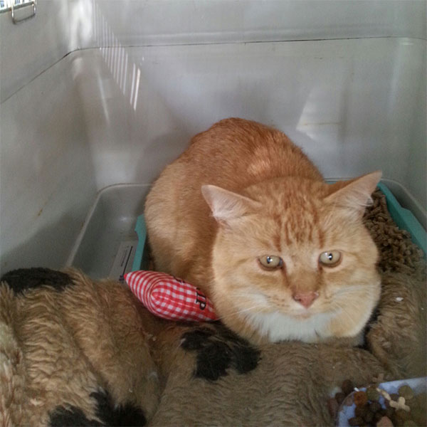 Handsome ginger fellow Garfield