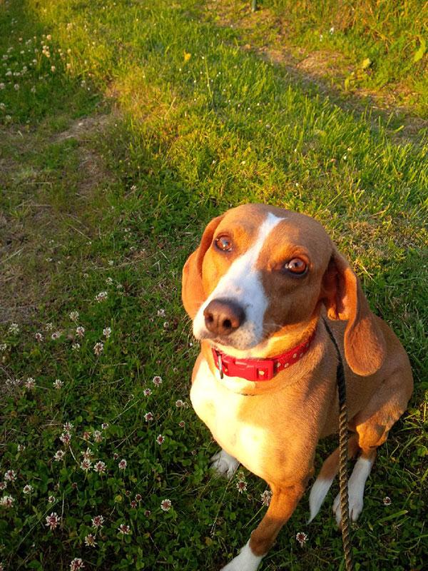 Annie May enjoying a sunny walk