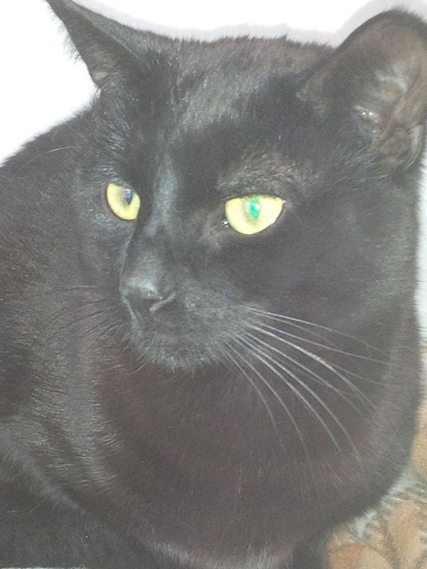 Percy… or Magnus — we're struggling to tell these two jet black slinky cats apart!