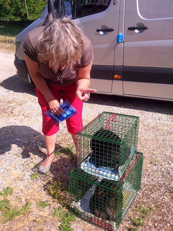 Fortunately for Maya, she and Mabel were the first pets to be delivered, just outside Figeac. Florent's mum Joelle was there to greet the cats, soon to be joined by Florent who was already on his way from the airport.