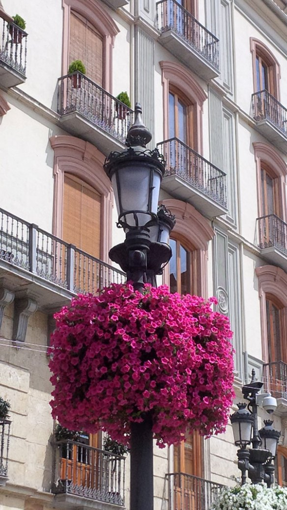 We always love visiting Granada. This time around, the collars of petunias around the lampposts caught our eye, their bright colours contrasting beautifully with the pale stonework.