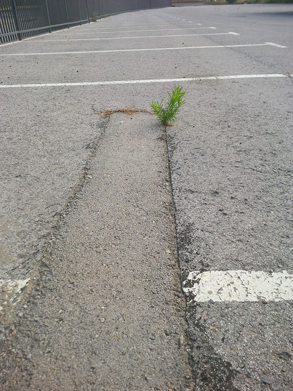 We always work hard to find secure overnight car parks. But if there's not much green around, it can pose a problem for dogs that won't do their business unless it's on grass! We fell around this morning as one by one our dogs made a bee-line for this single sprig poking out through the tarmac.