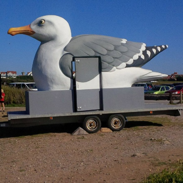 Oversize seagull spotted by courier M on his recent travels