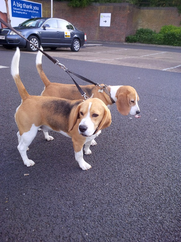 Cheeky chappies Bertie and Ted Beagle