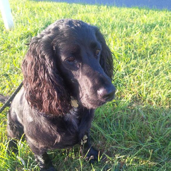 Hector enjoys a sunny walk