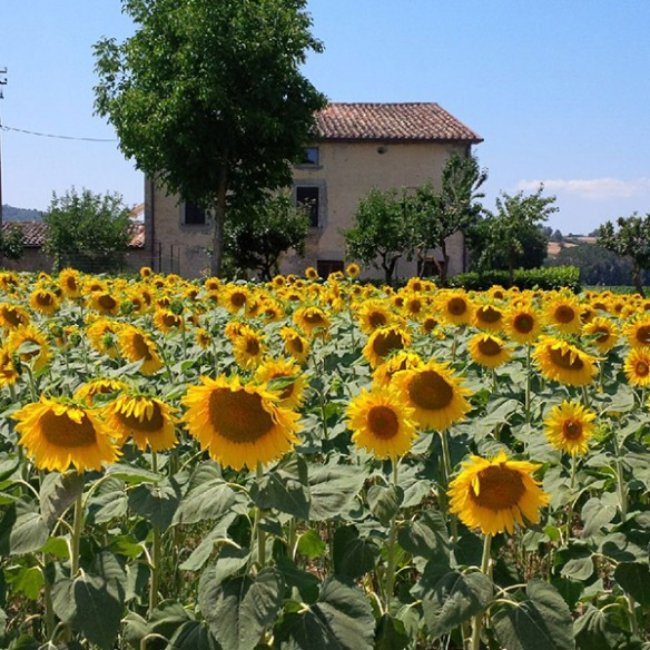 Wonderful Tuscan countryside