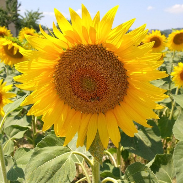 We just had to get closer to those sunflowers!