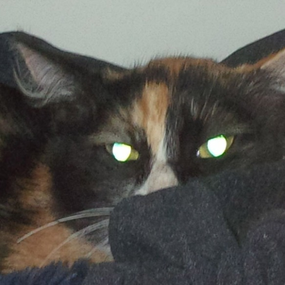 Zavia is a very shy, very pretty tortoiseshell girl — we hope to get a better photo of her as we become closer friends