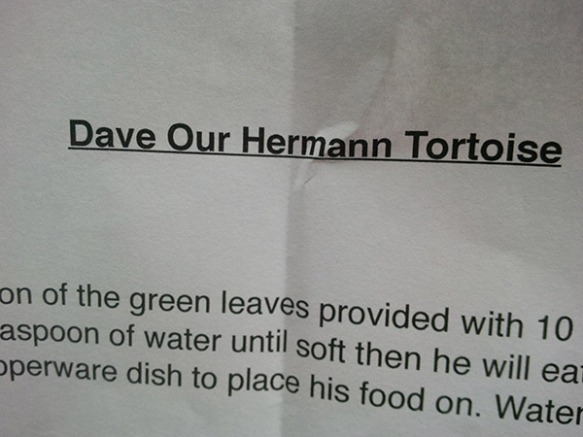 Dave came with clear instructions on how to take care of him and what he likes to eat