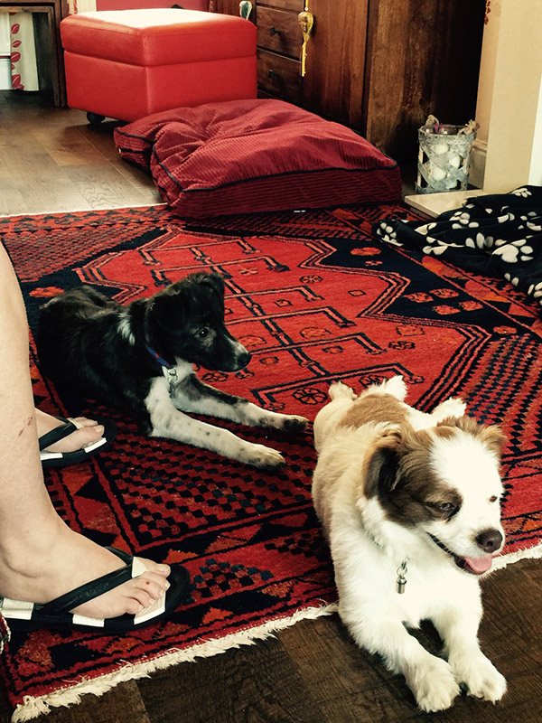 Billie (behind) looking very comfy in her new home with Joanne and new playmate Charlie