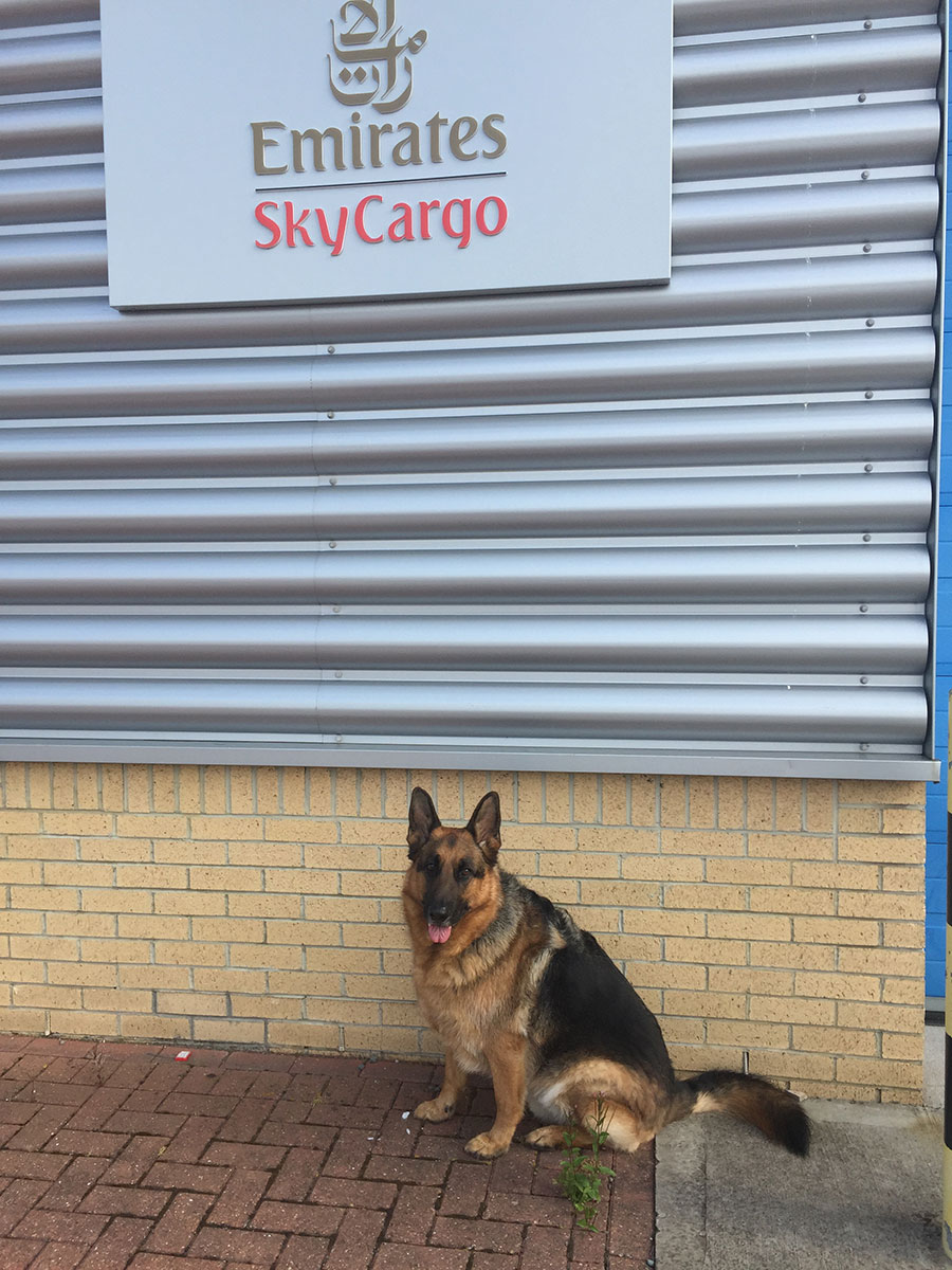 Handsome Sonny waiting at Emirates Sky Cargo at Newcastle airport