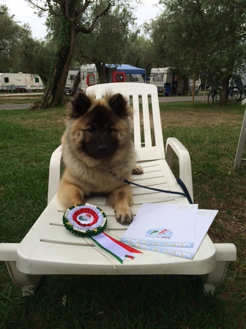 …and Ozzie. Both dogs have already qualified for Crufts 2016.