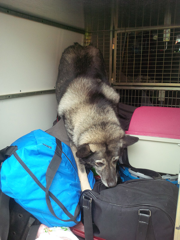 Sam's Elkhound Moleskine, who didn't travel with us, was quick to hop in and inspect our van