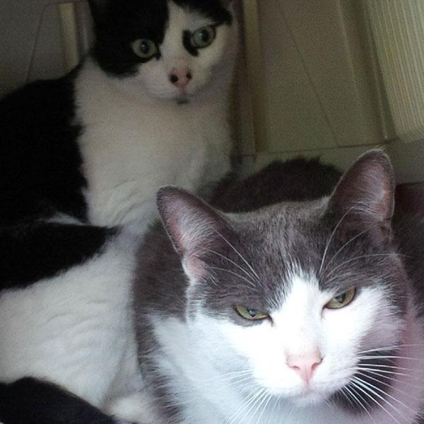 Gorgeous Rocky and Betty, Heidi's feline companions