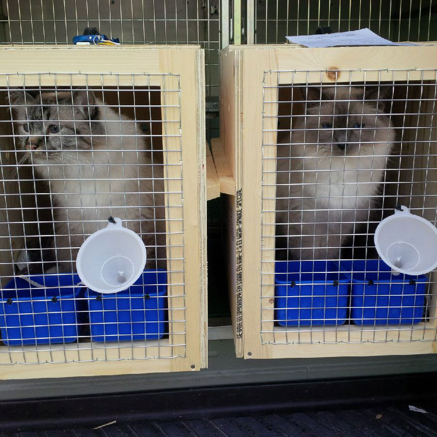 Cats Bacci and Pablo checking in at London Heathrow for their flight to South Korea