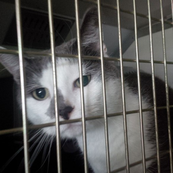 …Smokey — waving them off was difficult for their owners, but they'll soon be reunited