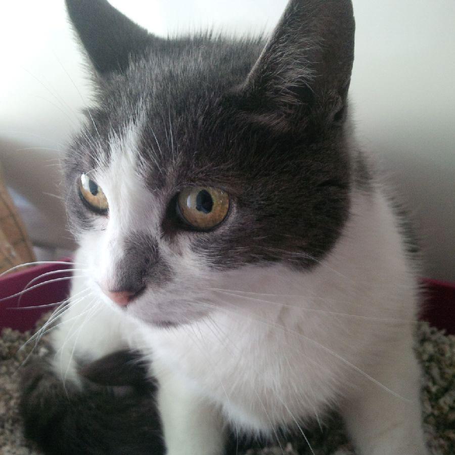 Dark grey- and -white Boo
