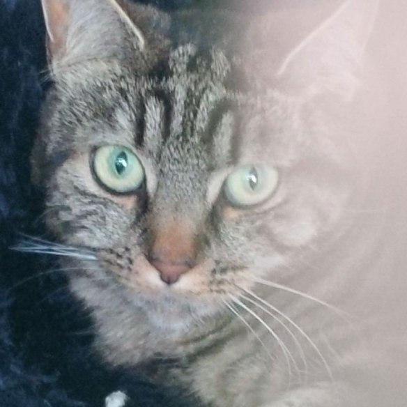 Tabby cat Izzie, travelling with…