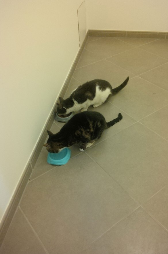 A very chilled-out pair, Muppet and Boo headed straight for their supper which was laid out ready and waiting for them