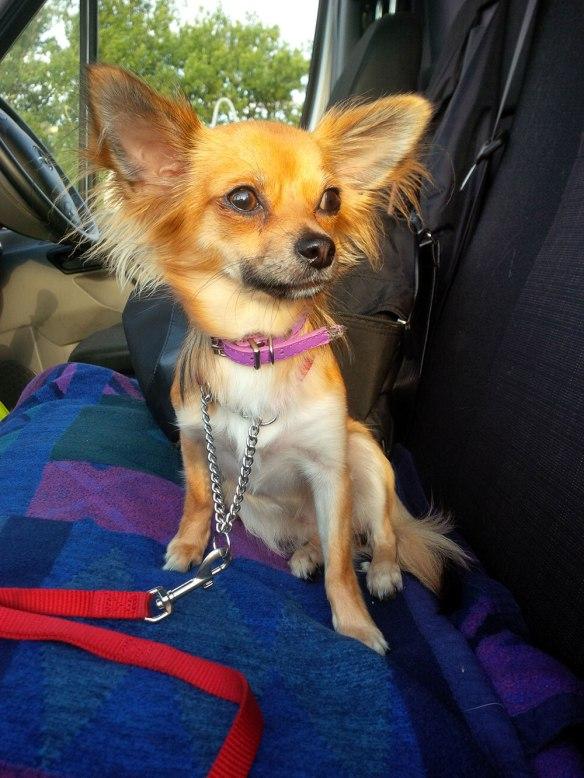 A closer look at Lola's fab ears