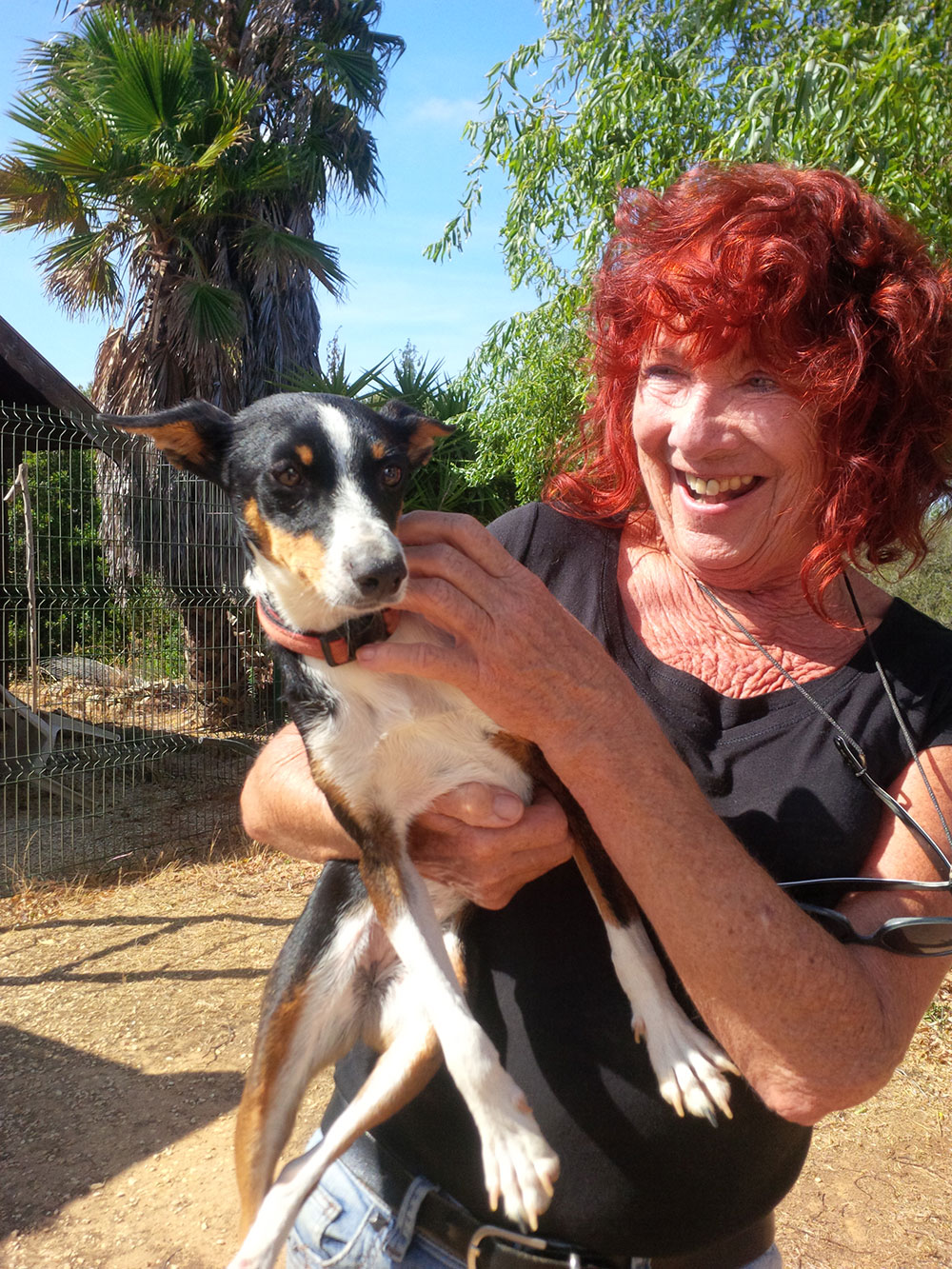 Heather from Barking Mad Kennels with her dog Pixie. Heather rescued Pixie after an accident, had her patched up, and decided to keep her. Then last year Pixie ate one (or more) of those terrible caterpillars and nearly died. She spent three days on a drip with a swollen tongue, but fortunately recovered and is once more in perfect health.