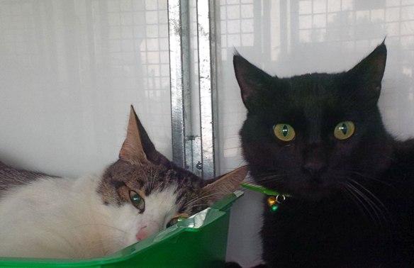 Pretty Kitten and stunning jet-black Lucky