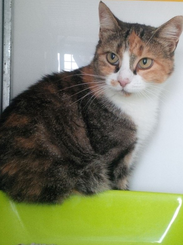 Gorgeous Petra — such a sweet and calm little girl