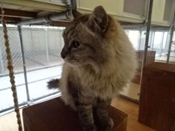 """Taffy in quarantine. His owner wrote to say: """"Just to let you know Taffy has arrived and is doing well so far in quarantine! Eating well and happy to get some attention! Thanks again for all your help — you were so wonderful!"""""""