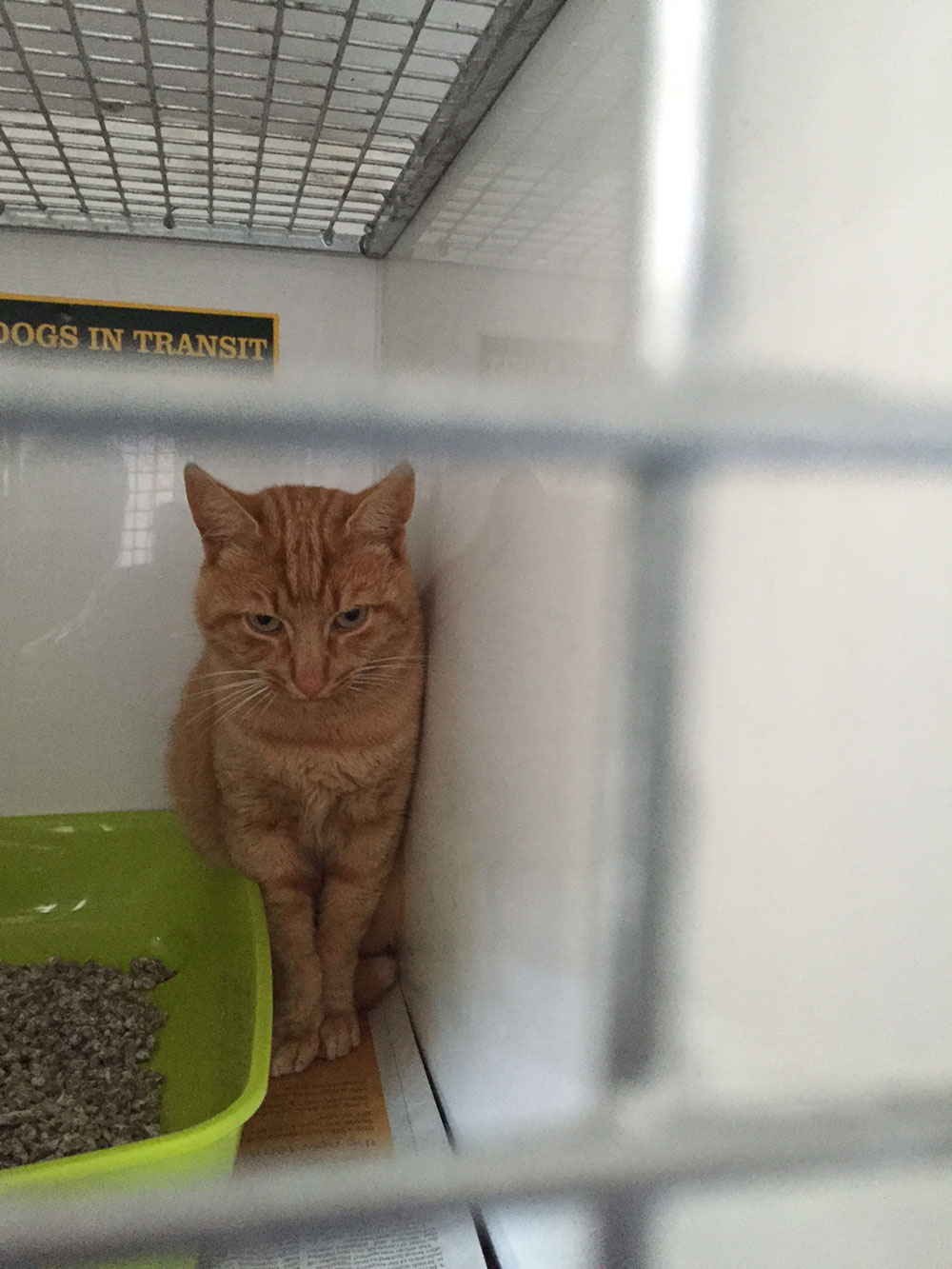 Well-named handsome Ginger