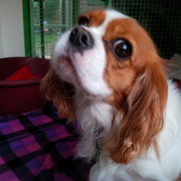 Lola gives us an irresistible look