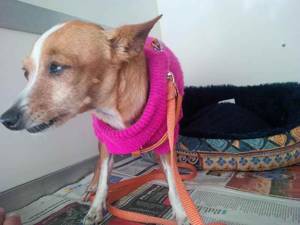Little Pixtura rocks her pink coat
