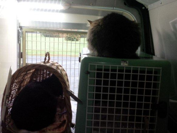 Moggy and TomTom have a great vantage point in the van
